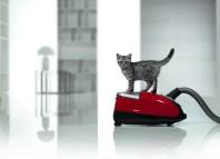 почему кошка боится пылесоса