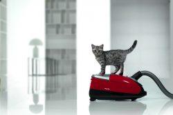 Почему кошка боится пылесоса?