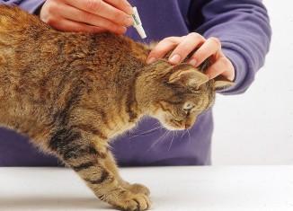 препараты от блох и клещей для кошек