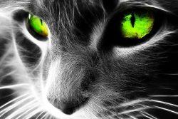 Ёшкин кот vs Йошкин кот