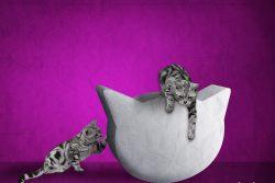 Порода кошки из рекламы Вискас