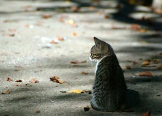 Что делать, если подобрали бездомную кошку