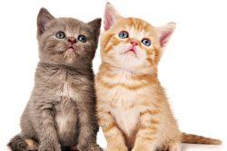 Сухие корма для кормления котят