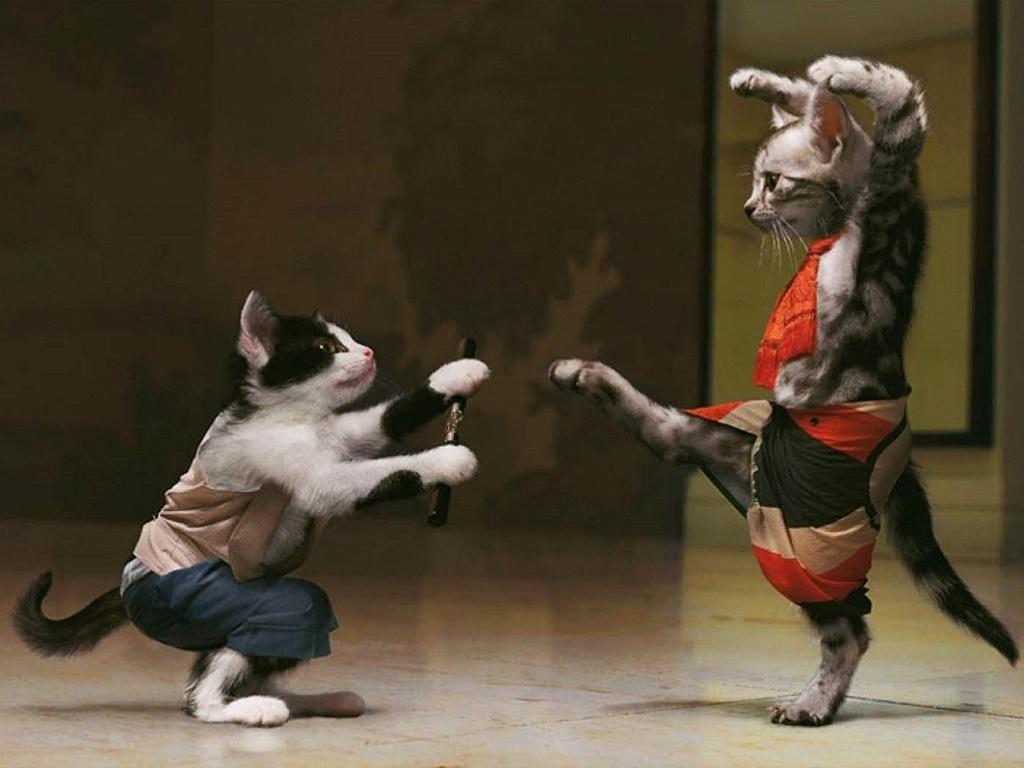 Смотреть Успокоительное для кошек видео