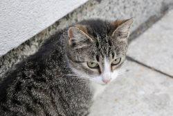 Пропал кот, что делать?