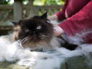 выпадает шерсть у кошки
