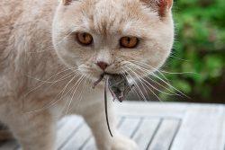 Корм Natureda: кошка – это хищник!