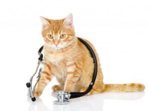 биохимический анализ крови кошек