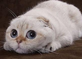 отек легких у кошек симптомы