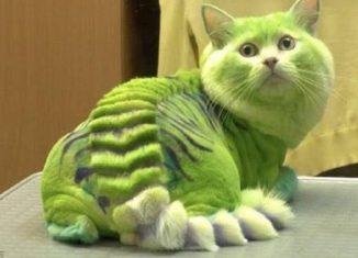 как подстричь кота в домашних условиях