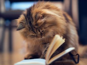 Как отучить кота драть мебель