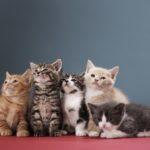 Как определить пол котенка: новорожденного и в один месяц