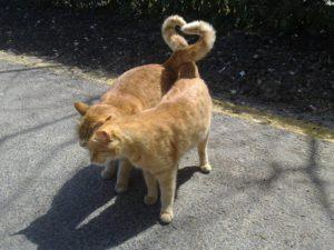 вязка кошки первый раз