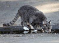 кот не пьет воду