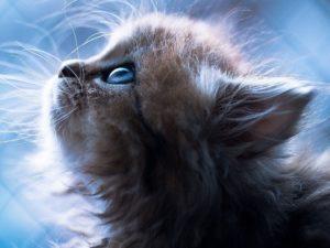 Когда у котят открываются глаза