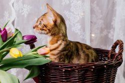 Конкурс в инстаграм «Мой кот мартовский»