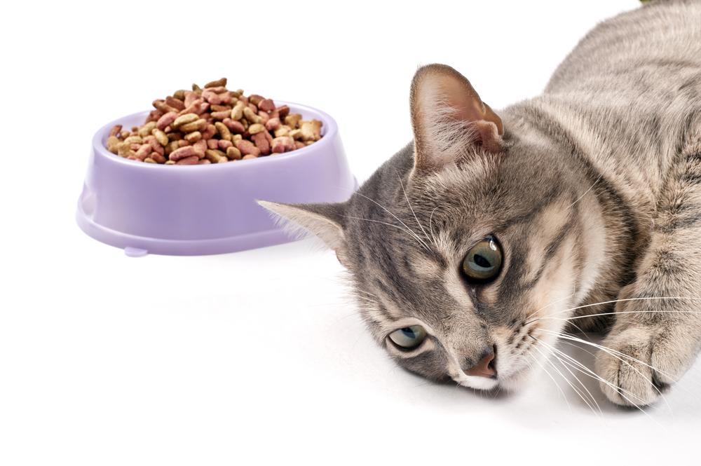 Кошка Резко Похудела Отказывается От Еды. Кошка не ест после родов: 10 основных причин голодной диеты
