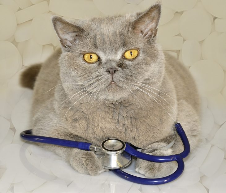 Иммунодефицит кошек