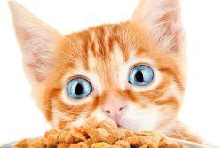 Топ 10 мифов о сухих кормах для кошек
