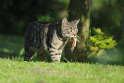 Корм для кошек Carnilove — для диких и свободных!