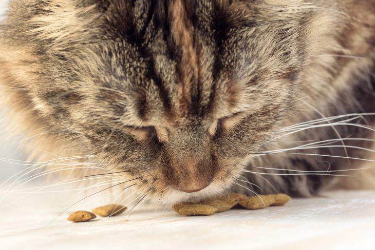 Корм для кошек Carnilove