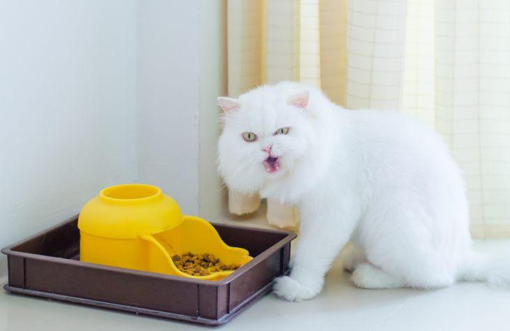 Интерактивные кормушки для кошек