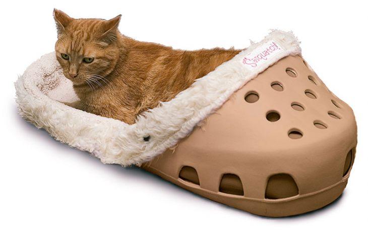 Топ 10 глупых изобретений для кошек