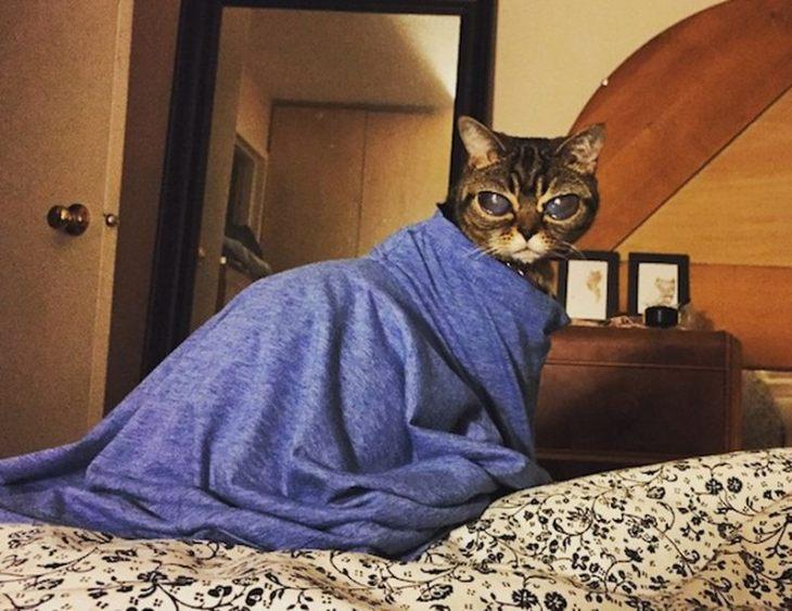 Не такие как все - 10 историй необычных кошек