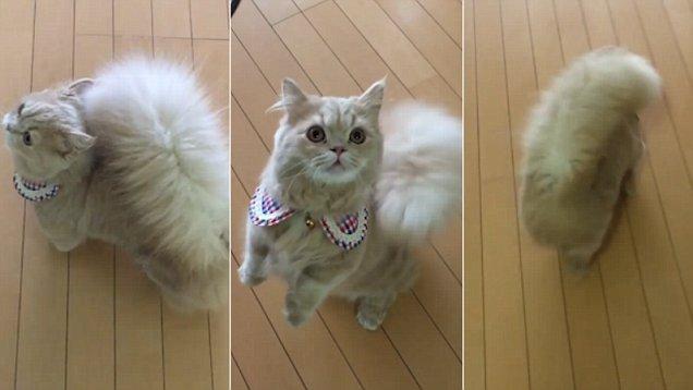Топ самых красивых кошек интернета