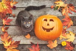 КотоДайджест на октябрь — все самое интересное
