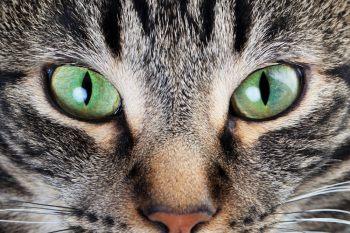 Сухой корм для кошек Applaws – не экономит на качестве