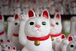 Не такие как все — 10 историй необычных кошек