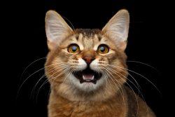 Обзор сухого корма Meowing Heads — серьезный бренд с веселым нравом