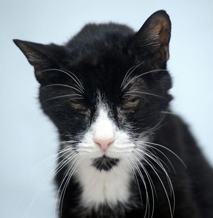 Кошачья старость - что нужно знать об уходе за стареющим животным