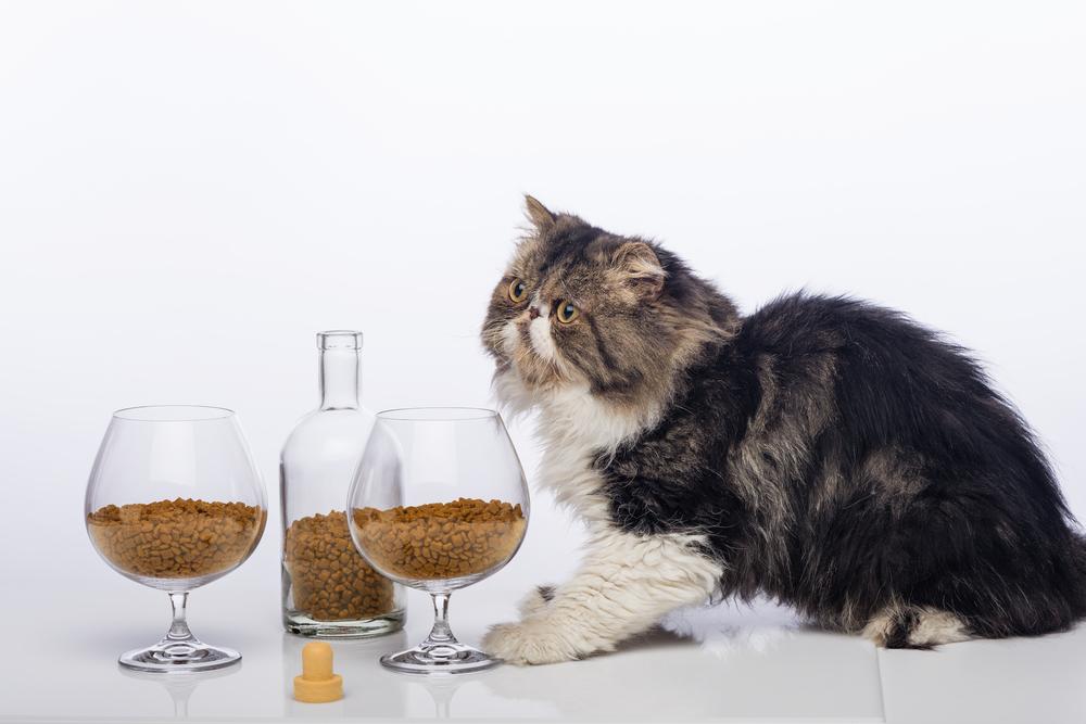 Корм для кошек «Леонардо»: описание и отзывы