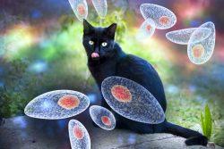 Простейшие у кошек: виды, диагностика, лечение
