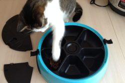 Обзор автокормушки на 6 кормлений для кошек и собак