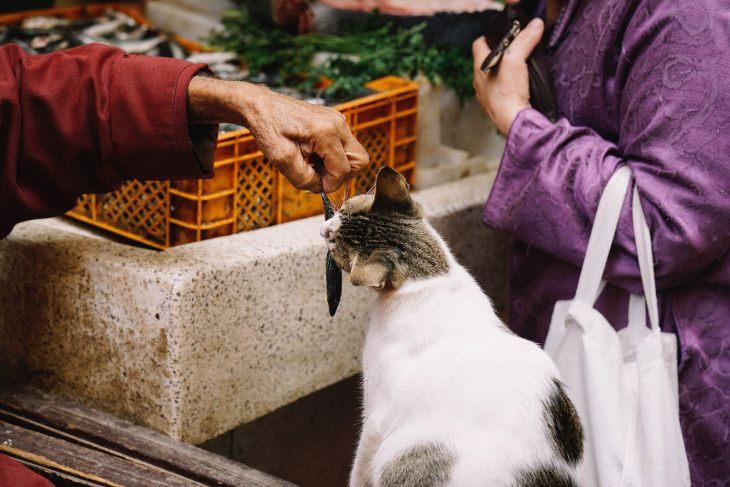 Какие глисты бывают у кошек