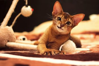 Сколько живут кошки в домашних условиях по человеческим меркам