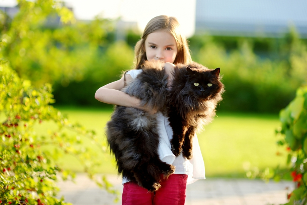 До какого возраста могут расти кошки