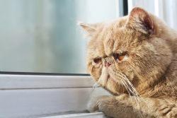 Cколько лет живут кошки?