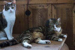 Кот или кошка – кого выбрать?