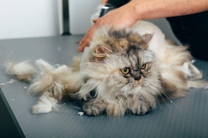 Солнечный и тепловой удары у кошек – как оказать животному помощь