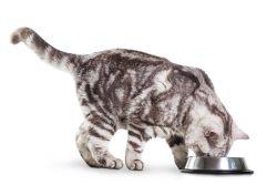 Питание кошек: общие понятия