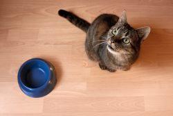 Чем лучше кормить кошку — советы и рекомендации