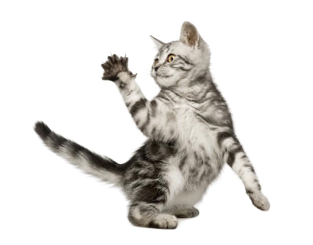 Как отучить котенка кусаться за руки