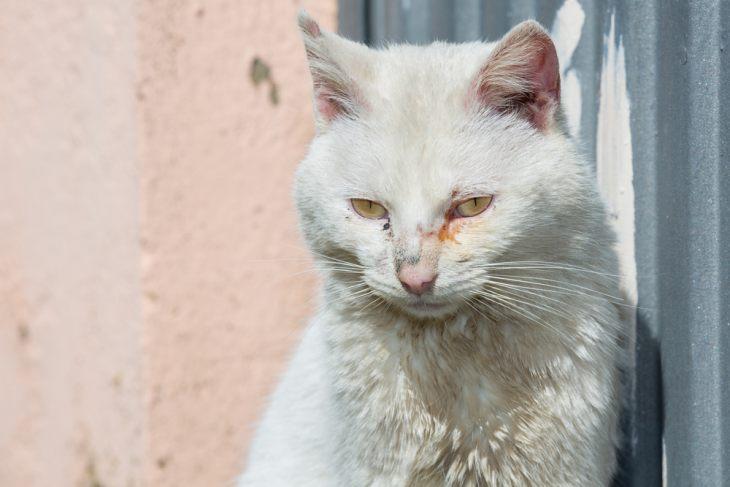 кошка слезятся глаза чем лечить