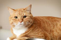 Как отучить кошку от искусственных кормов