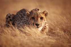 Обзор сухого корма Wildcat