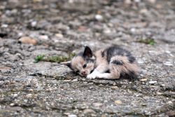 История бездомной кошачьей души